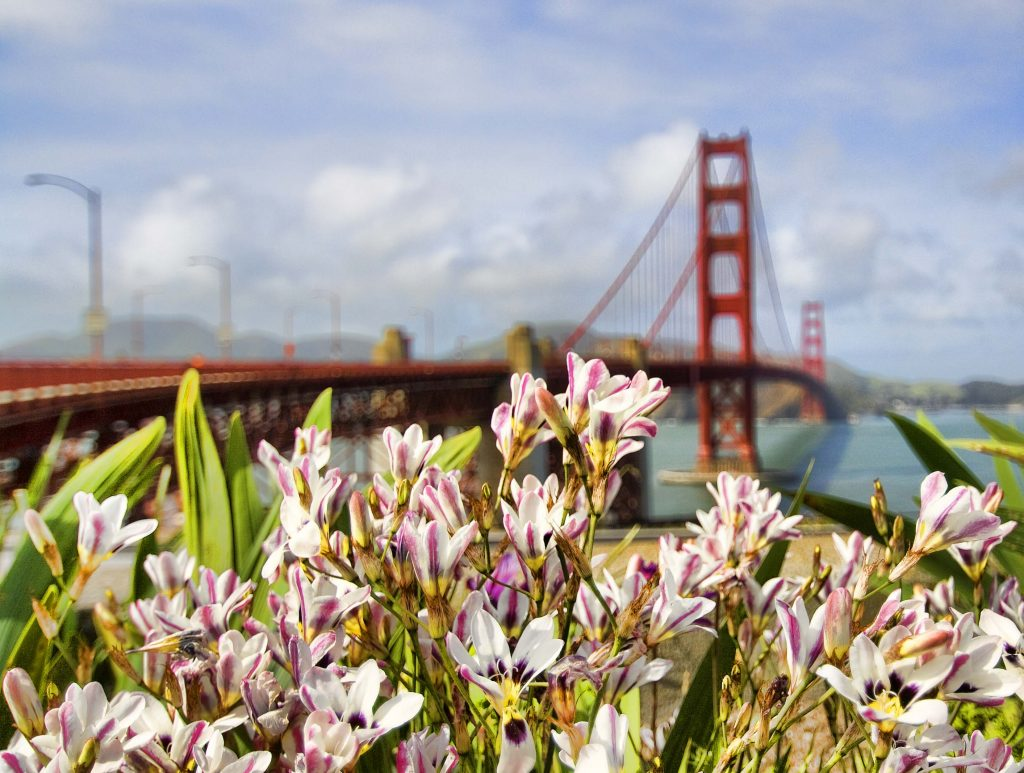 Spring Flowers at the Golden Gate Visitor Center